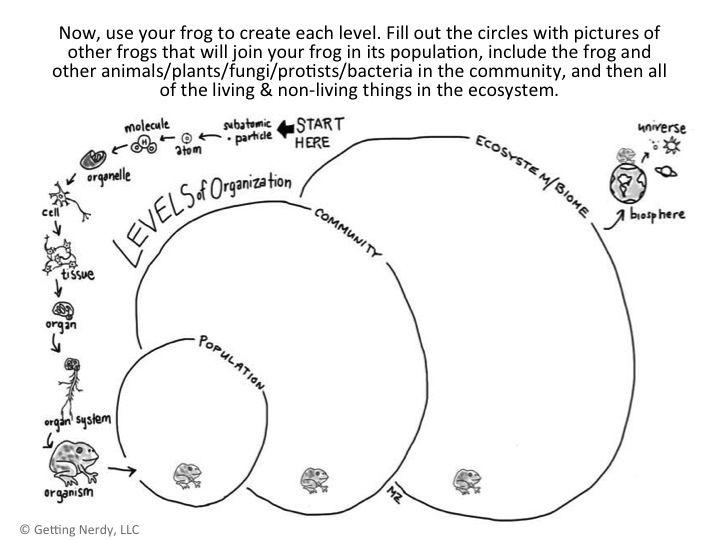 Best 25+ Levels Of Organization Biology Ideas On Free Worksheets Samples