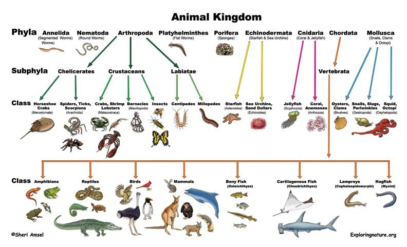 Classification Of Living Things Worksheets Free Worksheets Library