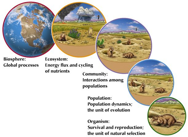Day 0  Ecological Levels Of Organization