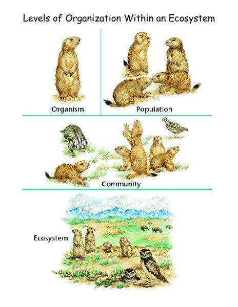 Ecology Levels Of Organization Worksheet