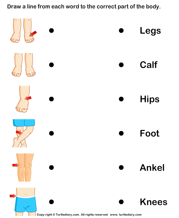 Human Parts Of The Body Worksheet
