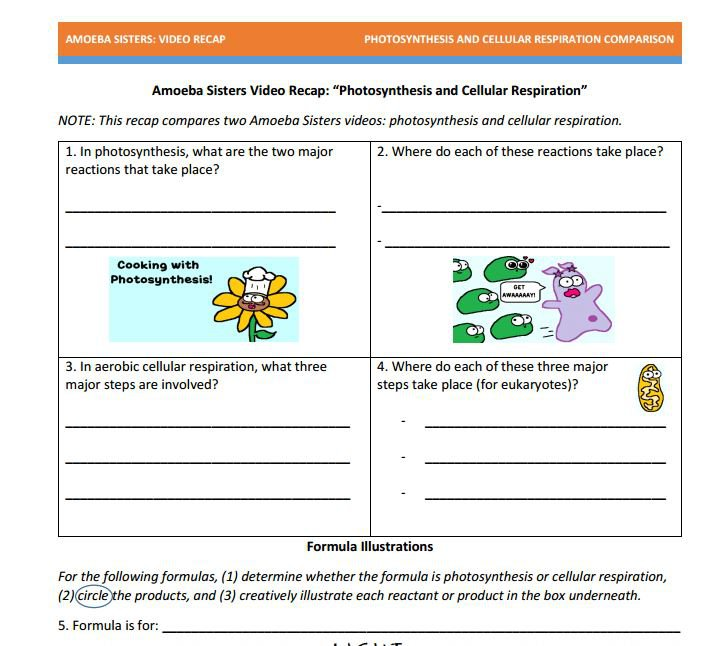 Photosynthesis Cellular Respiration Worksheets Answers Key