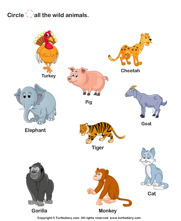 Identify Wild Animals Worksheet