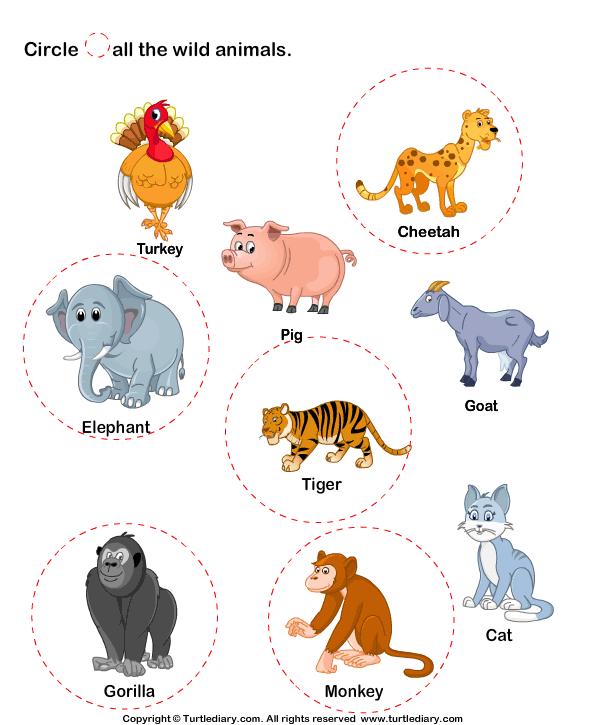 Identify Wild Animals Worksheet
