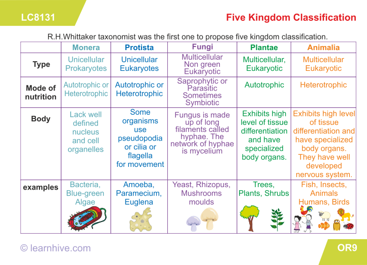 Learning Card For Five Kingdom Classification