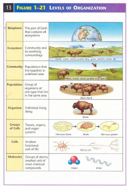 Levels Of Biological Ecological Organization