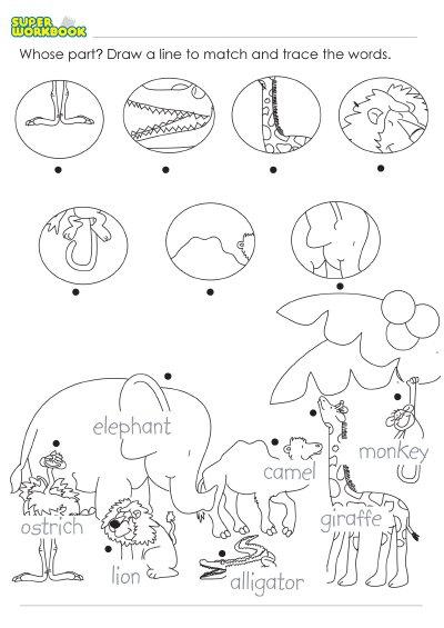 New 752 Kindergarten Zoo Worksheets