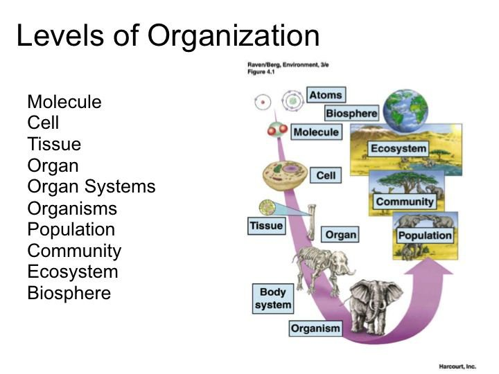Organization Of Living Things Worksheet, Organization Of Living