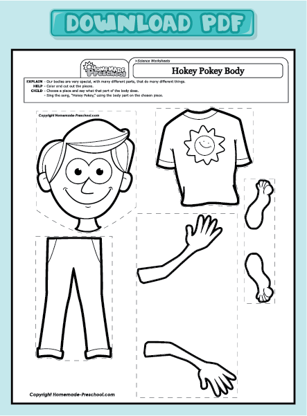 Parts Of The Body Worksheet Clipart (22+)