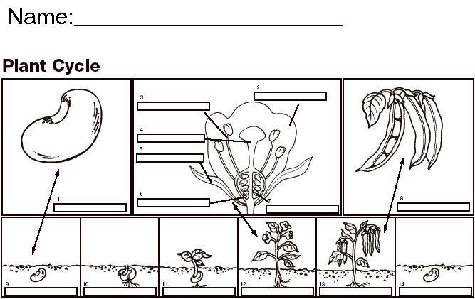 Seed Worksheet Free Worksheets Library