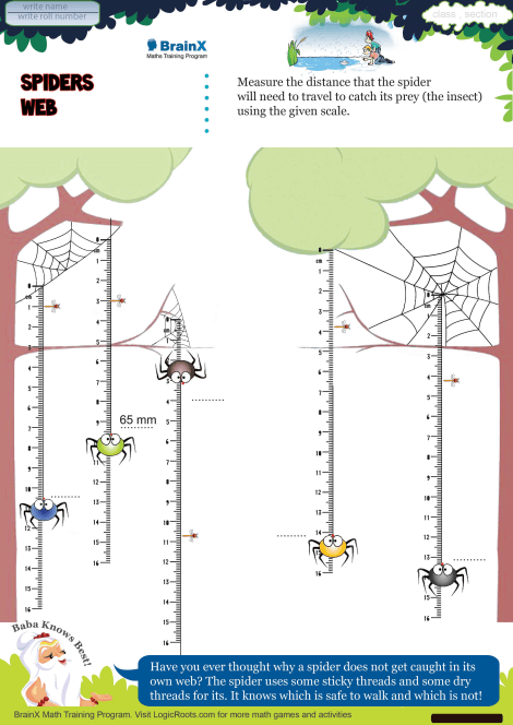 Spiders Web Math Worksheet For Grade 4