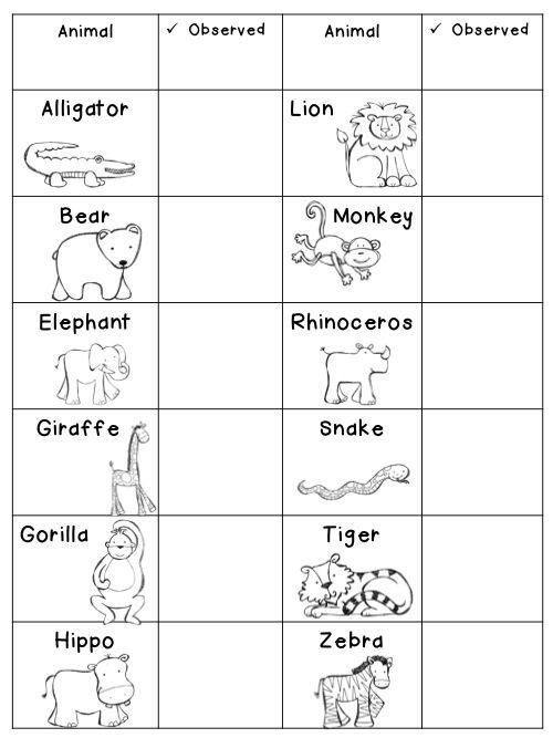 Zoo Animals Activity And Video