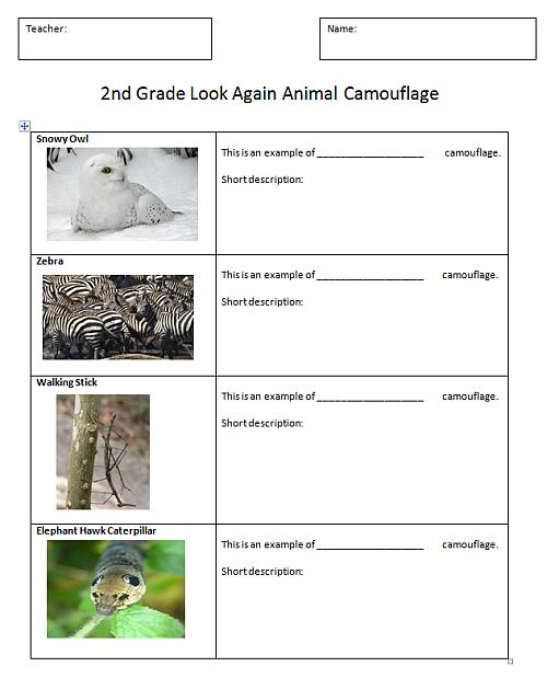 Animal Camouflage Activities
