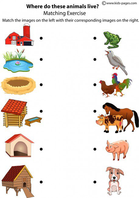 Animals Shelters Worksheet