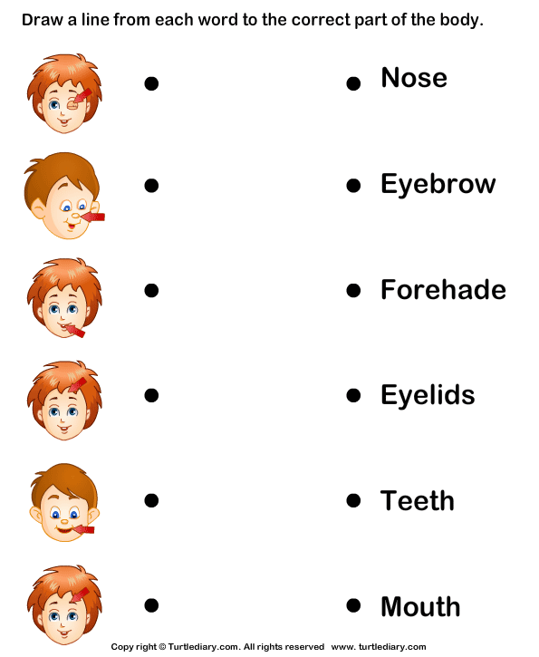 Body Parts Matching Worksheet