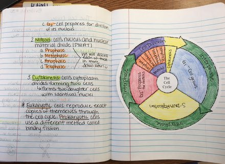 Cell Cycle Coloring Worksheet Answer Key Clever Crafts Free Worksheets Samples