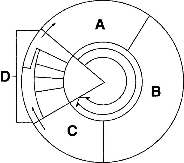 Cell Cycle Diagram Worksheet Free Worksheets Library