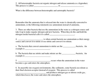 Cell Cycle Labeling Worksheet Answer Key Tecnologialinstante