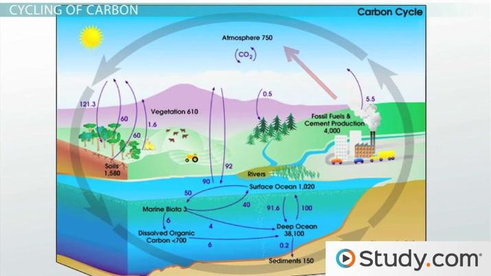 Cycles Of Matter  The Nitrogen Cycle And The Carbon Cycle