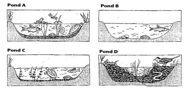 Ecology Worksheets For Middle School Free Worksheets Library