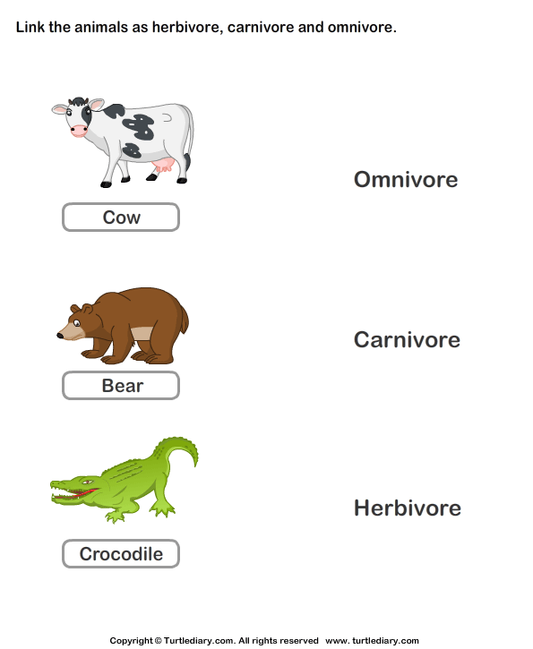 Herbivores Carnivores And Omnivores Animals Worksheet