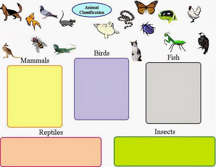 Invertebrate Classification Worksheet Free Worksheets Library