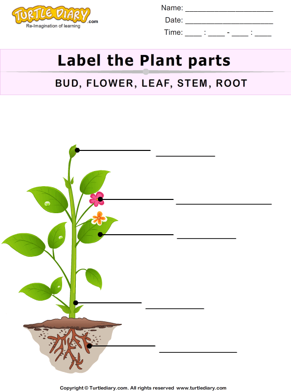 Label The Plant Parts Worksheet