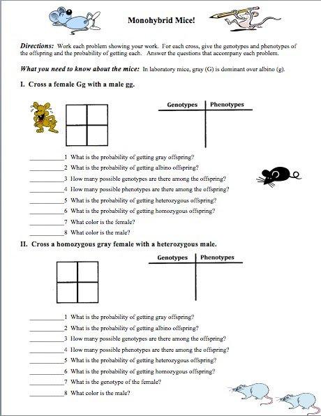 Monohybrid Crosses Worksheet