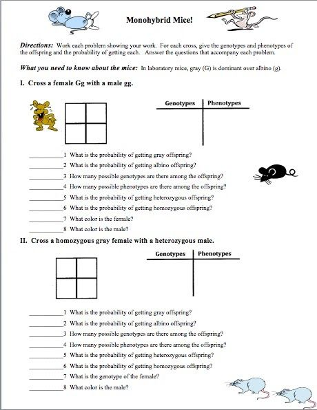 Need An Introductory Genetics Worksheet