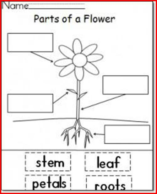 Parts Of A Plant Worksheet 1st Grade