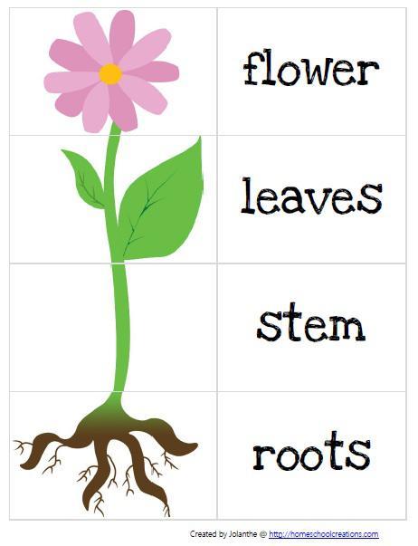 Parts Of A Plant Worksheet Kindergarten Free Worksheets Library