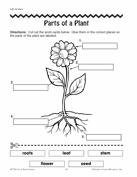 Parts Of Plants Worksheets