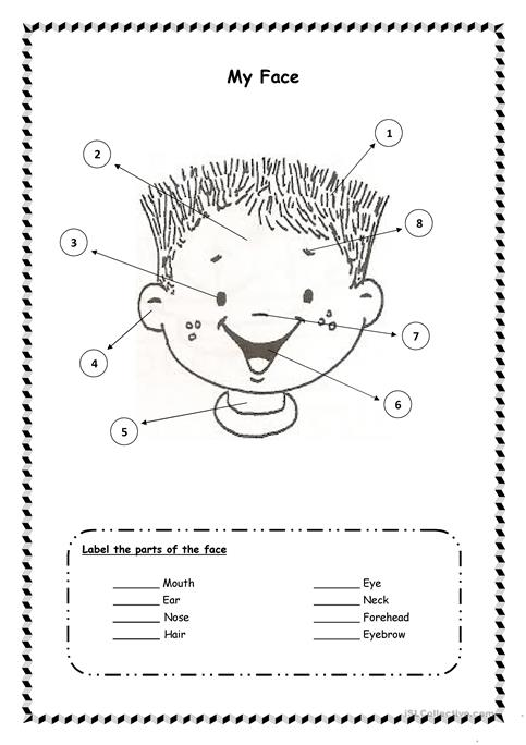 Parts Of The Face Worksheet