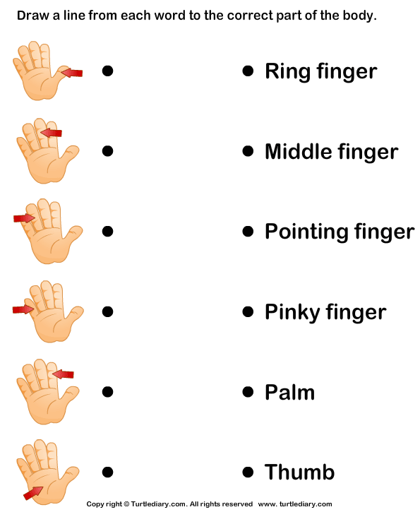 Parts Of The Human Body Worksheet