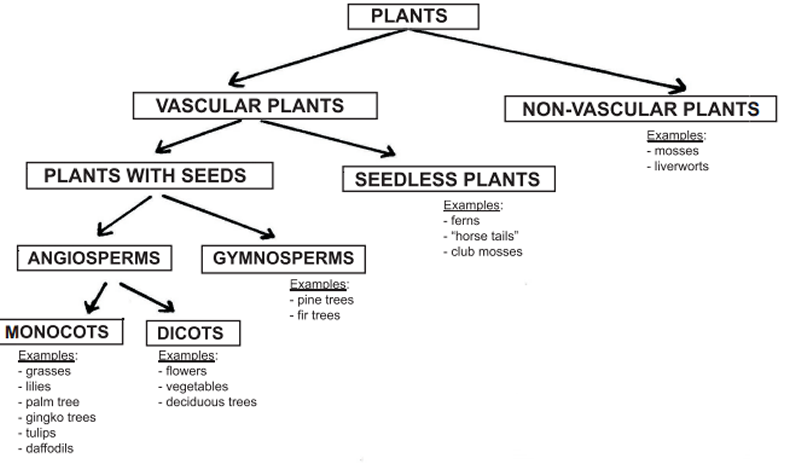 Plant Classification Worksheet Free Worksheets Library