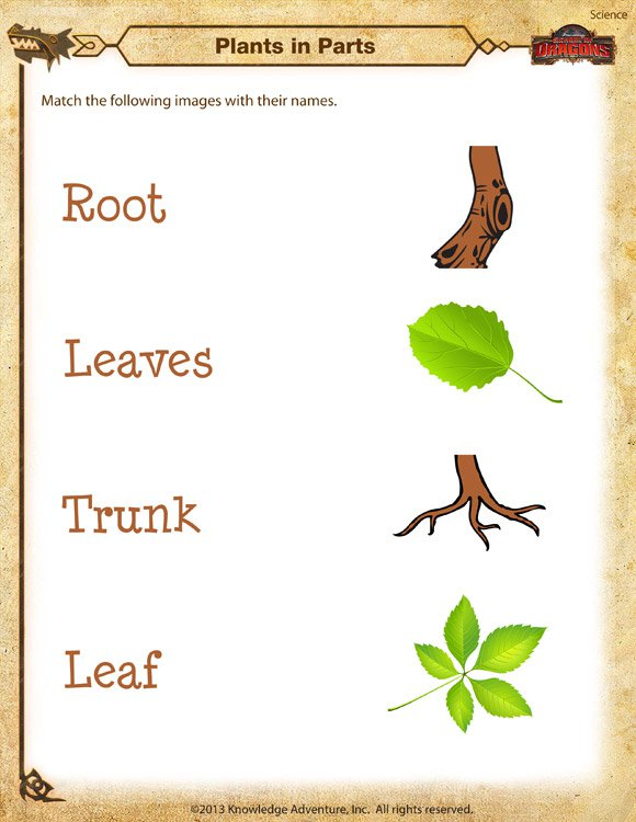Plants In Parts Worksheet –free Kindergarten Science Printable