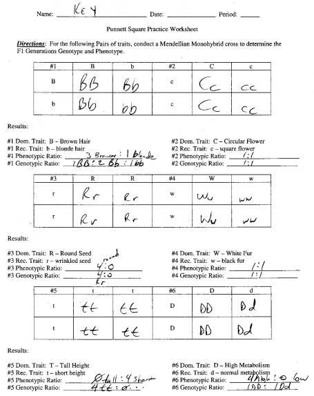 Practice Punnett Squares Worksheet Free Worksheets Library