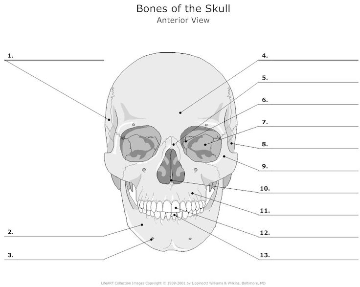 Project For Awesome Skull Bones Anatomy Quiz At Best On Quiz