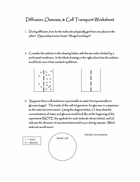 Worksheet Templates   Common Worksheets   Cell Transport Worksheet