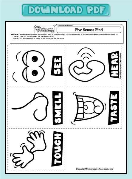5 Senses Worksheets Preschool Worksheets For All