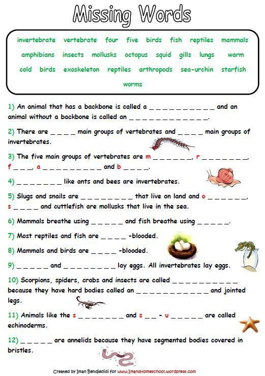 Best 25+ Animal Classification Activity Ideas On Free Worksheets Samples
