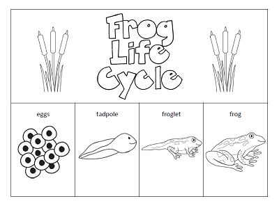 Best 25+ Frog Life Cycles Ideas On Free Worksheets Samples