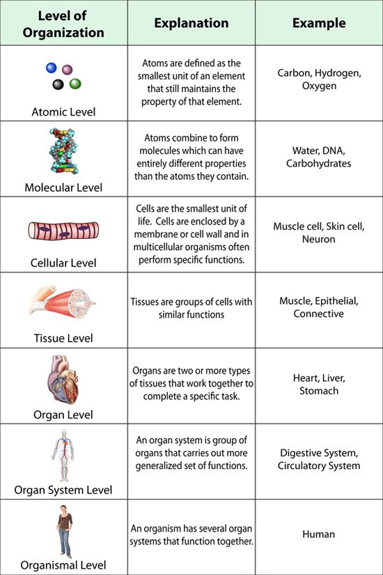 Best 25+ Levels Of Organization Biology Ideas On Free Worksheets Samples