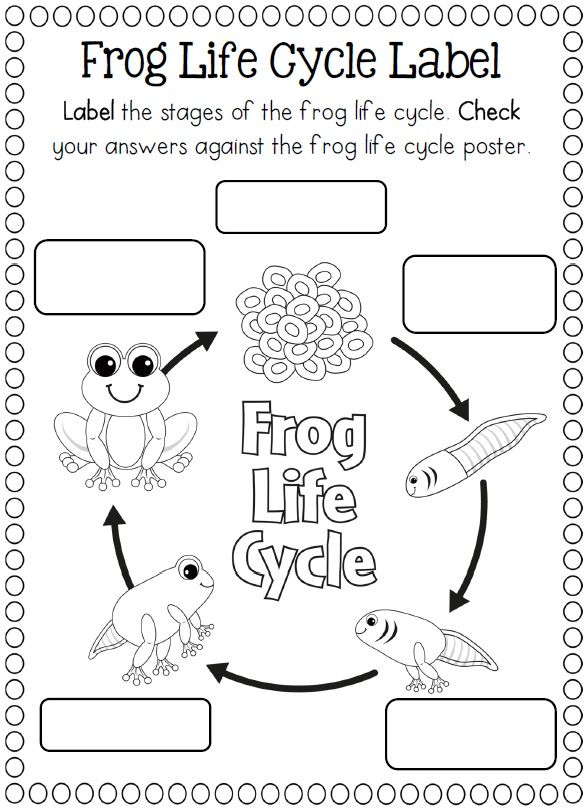 Best 25+ Life Cycle Of Frog Ideas On Free Worksheets Samples