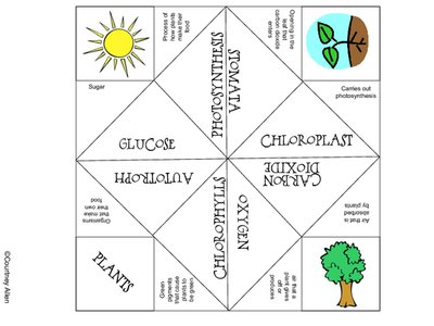 Best Solutions Of Photosynthesis Worksheets For 3rd Grade Also