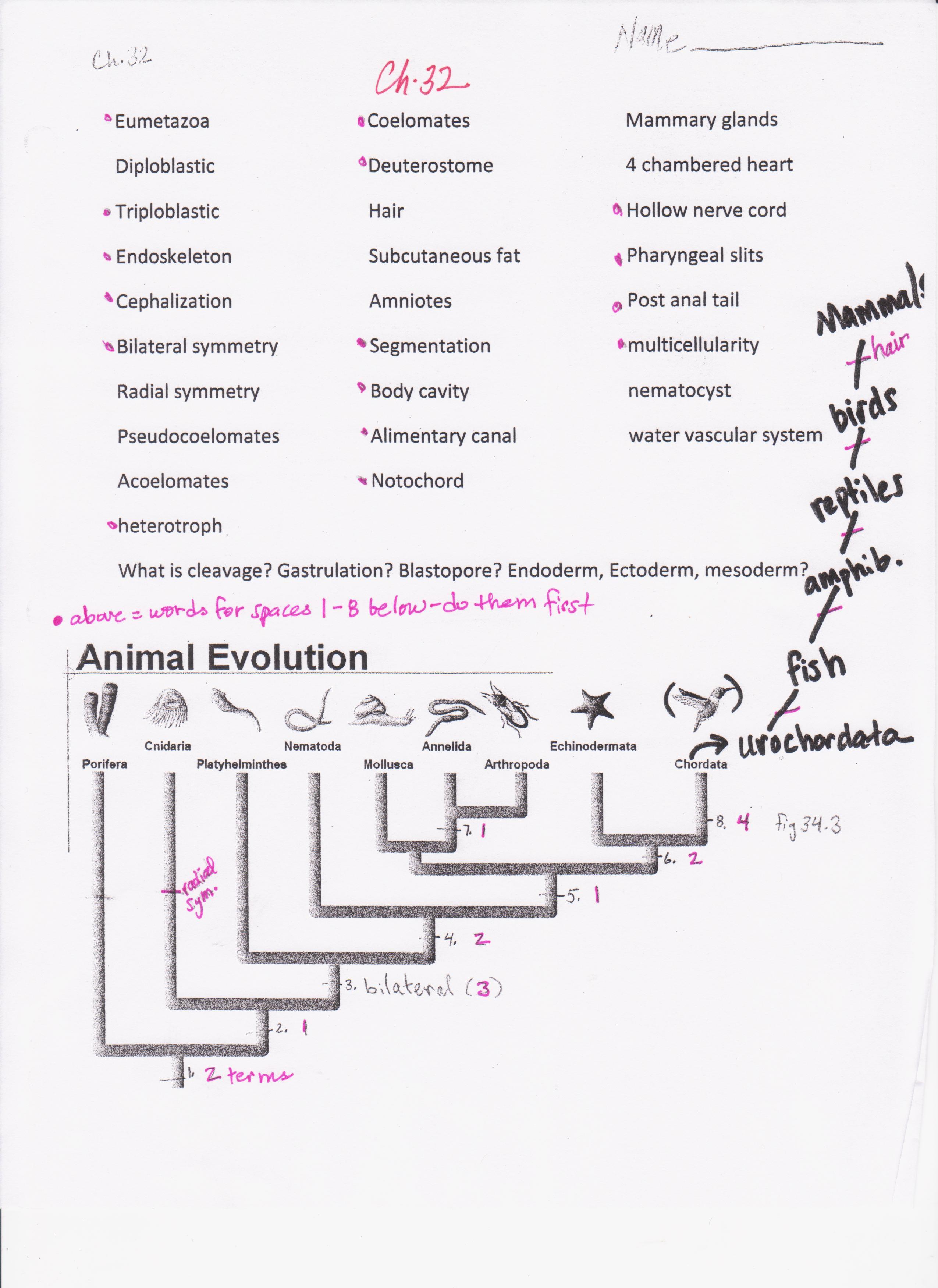 Biology Worksheets Animal Kingdom