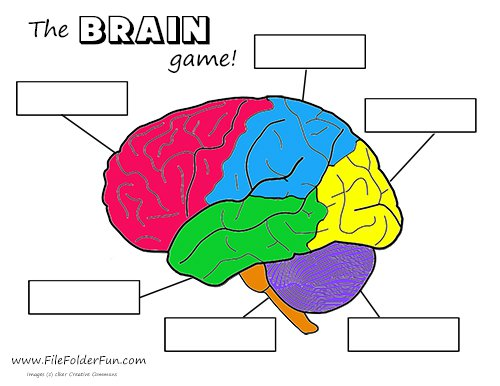 Brain Labeling Worksheet Brain Clipart Label Pencil And In Color