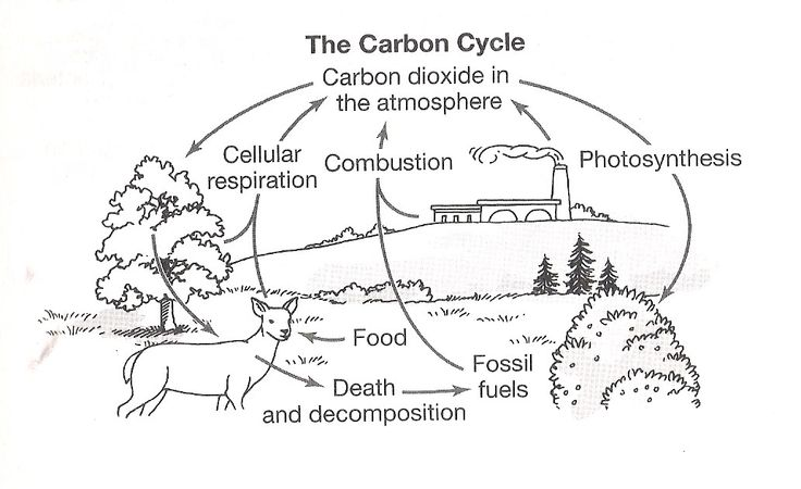 Carbon Cycle Coloring Worksheet Nitrogen Cycle Clip Art 50 New