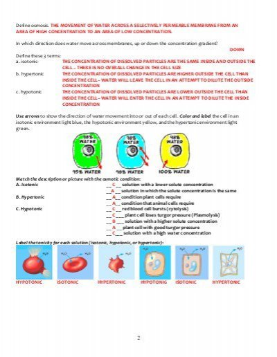 Cell Membrane And Tonicity Worksheet Worksheet, Cell Membrane And