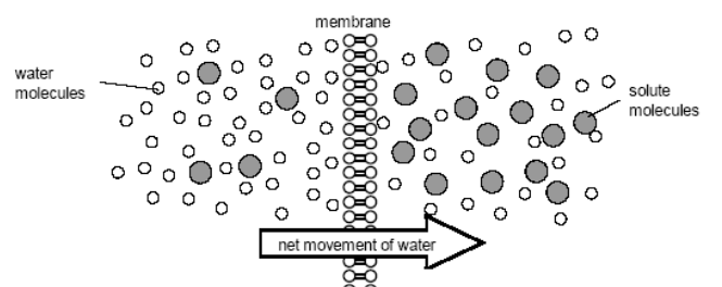 Cell Membrane Images